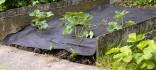 Netkaná mulčovací textilie černá 1,5 x 5 m 50g/m2